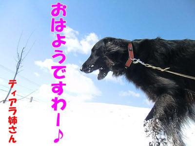 チャンスとティアラ+ココ-20120326-1-400.jpg