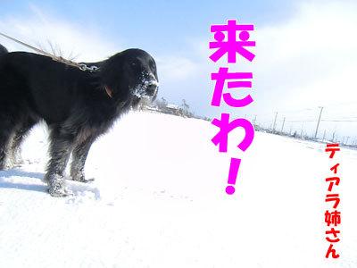 チャンスとティアラ+ココ-20120326-2-400.jpg