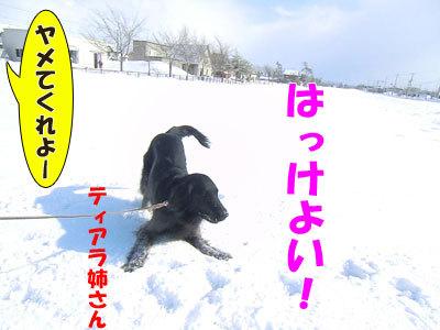 チャンスとティアラ+ココ-20120326-3-400.jpg