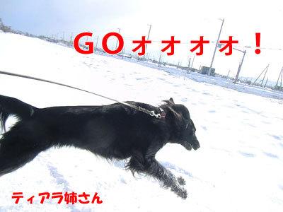 チャンスとティアラ+ココ-20120326-4-400.jpg