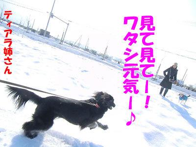 チャンスとティアラ+ココ-20120326-5-400.jpg