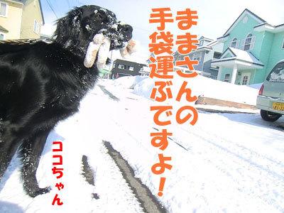 チャンスとティアラ+ココ-20120326-6-400.jpg