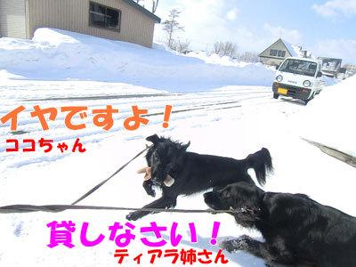 チャンスとティアラ+ココ-20120326-7-400.jpg