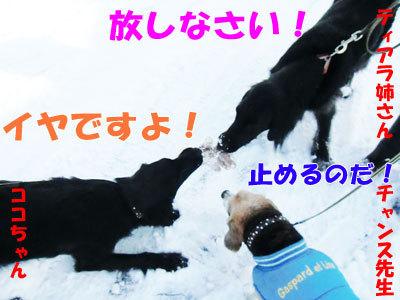 チャンスとティアラ+ココ-20120326-8-400.jpg