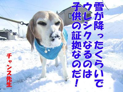チャンスとティアラ+ココ-20120326-9-400.jpg