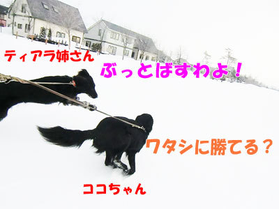 チャンスとティアラ+ココ-20120327-1-400.jpg