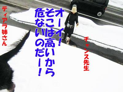 チャンスとティアラ+ココ-20120327-2-400.jpg