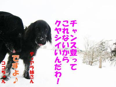 チャンスとティアラ+ココ-20120327-3-400.jpg