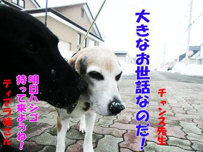 チャンスとティアラ+ココ-20120327-4-400.jpg