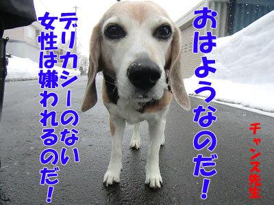 チャンスとティアラ+ココ-20120327-5-400.jpg
