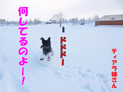 チャンスとティアラ+ココ-20120328-3-400.jpg