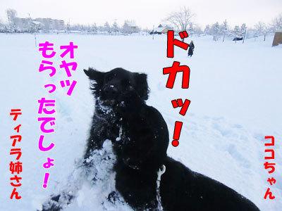 チャンスとティアラ+ココ-20120328-4-400.jpg