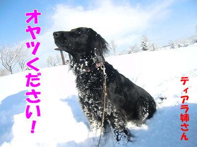 チャンスとティアラ+ココ-20120328-5-400.jpg