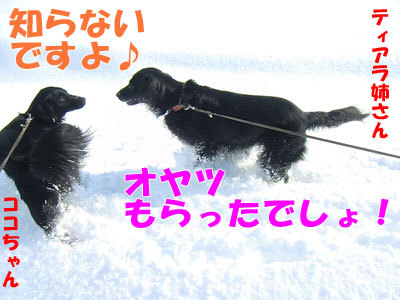 チャンスとティアラ+ココ-20120328-7-400.jpg