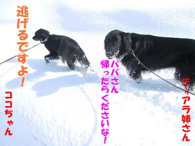チャンスとティアラ+ココ-20120328-8-400.jpg