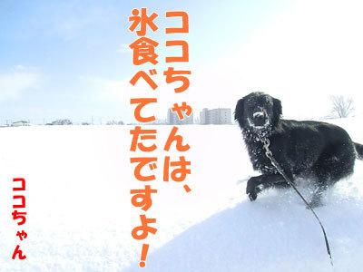 チャンスとティアラ+ココ-20120328-9-400.jpg