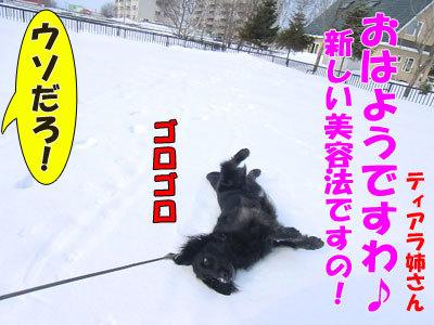 チャンスとティアラ+ココ-20120329-1-400.jpg