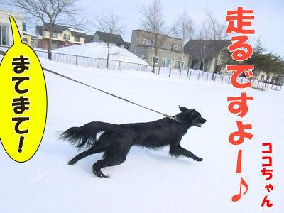 チャンスとティアラ+ココ-20120329-2-400.jpg