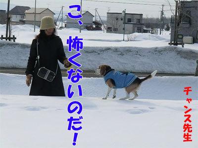 チャンスとティアラ+ココ-20120329-3-400.jpg