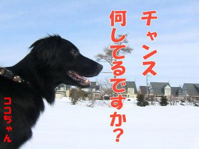 チャンスとティアラ+ココ-20120329-4-400.jpg