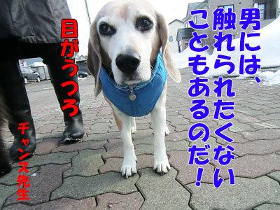 チャンスとティアラ+ココ-20120329-5-400.jpg