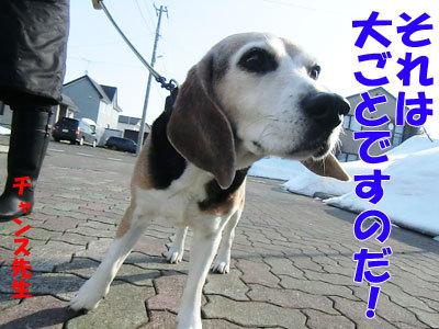 チャンスとティアラ+ココ-20120330-1-400.jpg