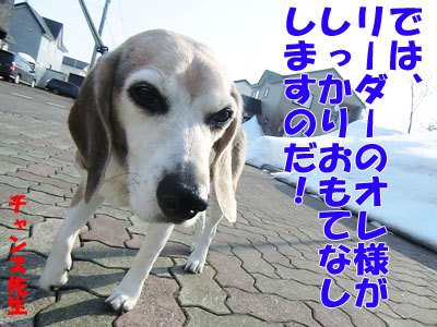 チャンスとティアラ+ココ-20120330-2-400.jpg