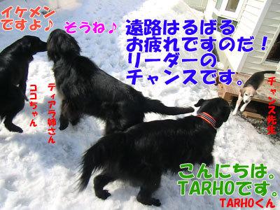 チャンスとティアラ+ココ-20120330-3-400.jpg