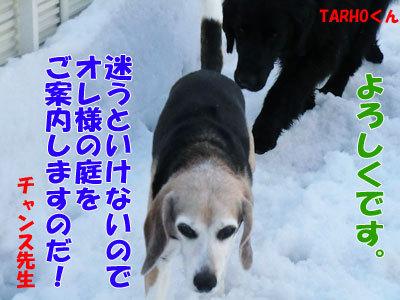 チャンスとティアラ+ココ-20120330-4-400.jpg