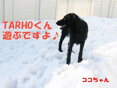 チャンスとティアラ+ココ-20120330-6-400.jpg