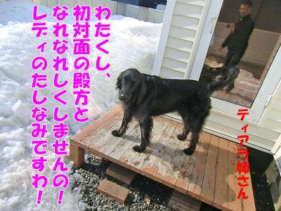 チャンスとティアラ+ココ-20120330-8-400.jpg