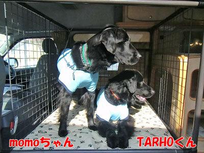 チャンスとティアラ+ココ-20120330-10-400.jpg