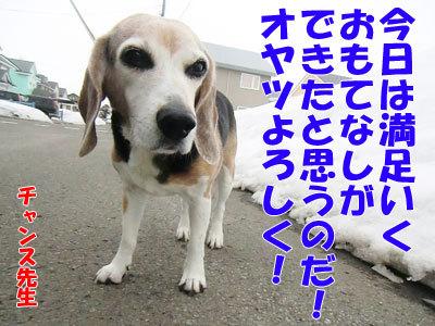 チャンスとティアラ+ココ-20120330-11-400.jpg