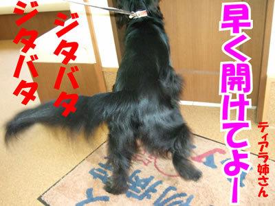 チャンスとティアラ+ココ-20100708-10.jpg