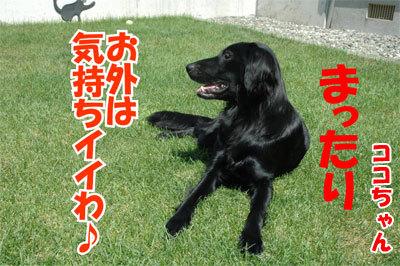 チャンスとティアラ+ココ-20100828-2-400.jpg