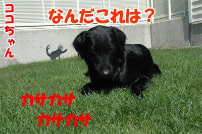 チャンスとティアラ+ココ-20100828-5-400.jpg