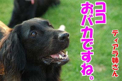 チャンスとティアラ+ココ-20100828-9-400.jpg
