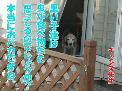 チャンスとティアラ+ココ-20100828-10-400.jpg