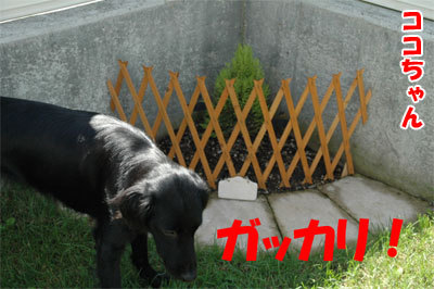 チャンスとティアラ+ココ-20100902-5-400.jpg