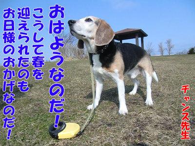 チャンスとティアラ+ココ-20120423-1-400.jpg