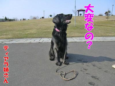 チャンスとティアラ+ココ-20120423-4-400.jpg