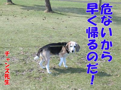チャンスとティアラ+ココ-20120423-5-400.jpg