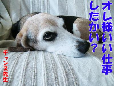 チャンスとティアラ+ココ-20120424-10-400.jpg