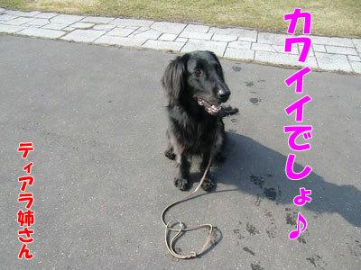 チャンスとティアラ+ココ-20120425-1-400.jpg
