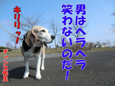チャンスとティアラ+ココ-20120425-3-400.jpg