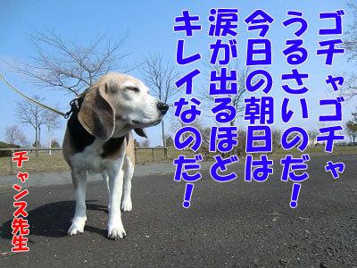 チャンスとティアラ+ココ-20120425-4-400.jpg