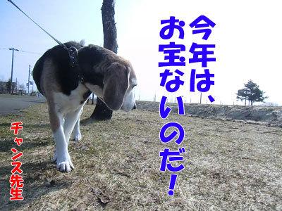チャンスとティアラ+ココ-20120426-1-400.jpg