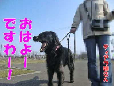 チャンスとティアラ+ココ-20120426-2-400.jpg