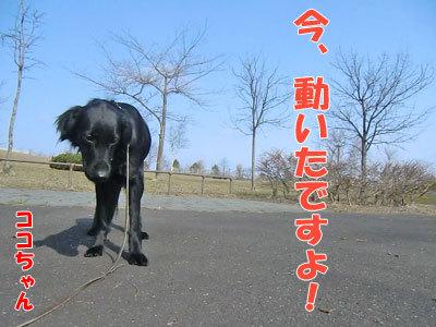 チャンスとティアラ+ココ-20120426-3-400.jpg