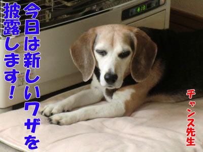 チャンスとティアラ+ココ-20120427-1-400.jpg